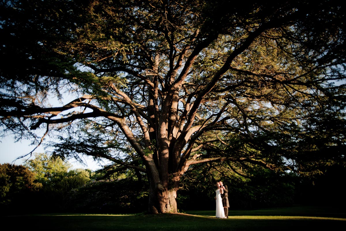 bride and groom beneath large tree