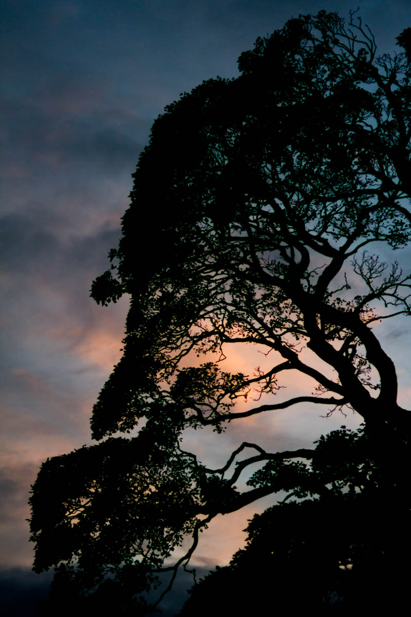 silhouette of tree at dusk